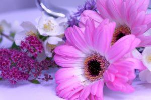Blumenstilleben in magenta