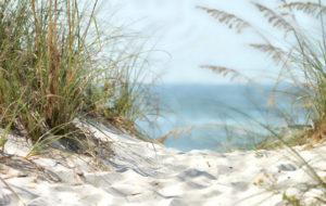 beach, CCO-Public-Domain-Lizenz, Lisa Runnels, Public Domain Pictures, 640, bearbeitet f Startseite