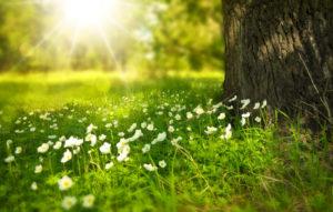 spring-tree-flowers-meadow-verkleinert