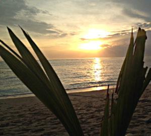 Sonnenuntergang_mit_Palme_im Vordergrund, 721×651